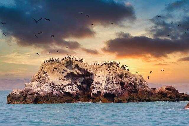 Islas Ballestas paseo en las tardes