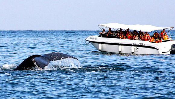 avistamiento de ballenas en mancora
