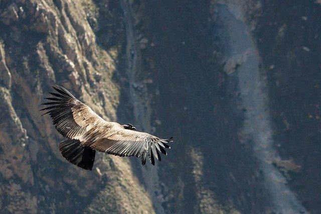 vuelo condor cañon colca